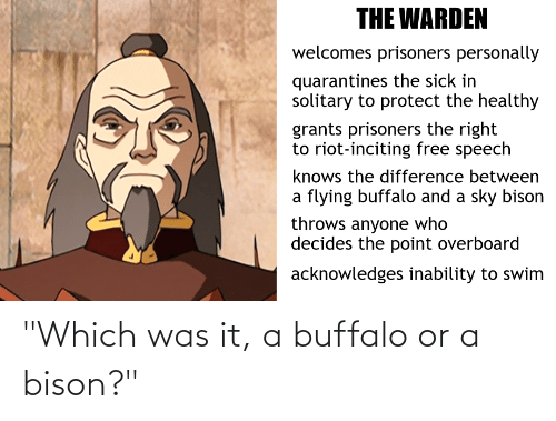 """bison: """"Which was it, a buffalo or a bison?"""""""