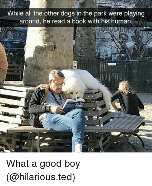 withings: While all the other dogs in the park were playing  around, he read a book with his human.  Itiban What a good boy (@hilarious.ted)