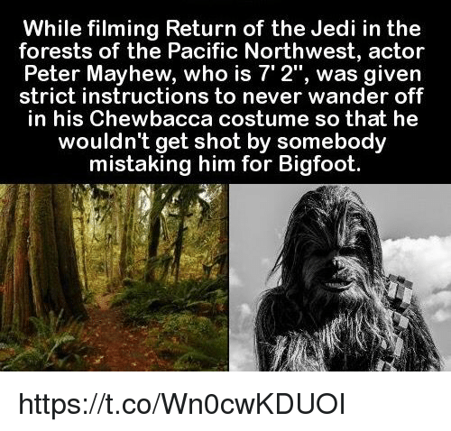 Bigfoot, Chewbacca, and Jedi: While filming Return of the Jedi in the  forests of the Pacific Northwest, actor  Mayhew, is was given  strict instructions to never wander off  in his Chewbacca costume so that he  wouldn't get shot by somebody  mistaking him for Bigfoot. https://t.co/Wn0cwKDUOI