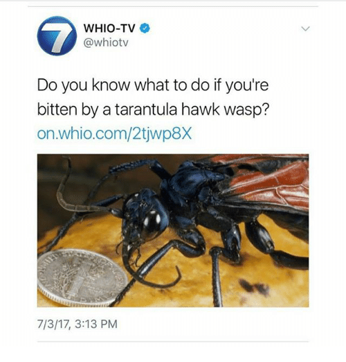 Ironic, Bitten, and Wasp: WHIO-TV o  @whiotv  Do you know what to do if you're  bitten by a tarantula hawk wasp?  on.whio.com/2tjwp8x  7/3/17, 3:13 PM