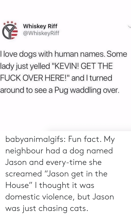 "Domestic Violence: Whiskey Riff  @WhiskeyRiff  I love dogs with human names. Some  lady just yelled ""KEVIN! GET THE  FUCK OVER HERE!"" and I turned  around to see a Pug waddling over. babyanimalgifs:  Fun fact. My neighbour had a dog named Jason and every-time she screamed ""Jason get in the House"" I thought it was domestic violence, but Jason was just chasing cats."