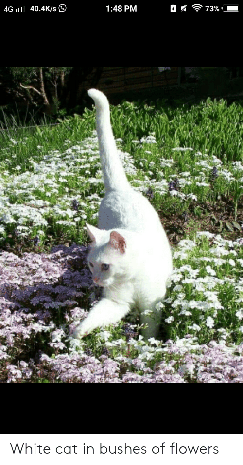 bushes: White cat in bushes of flowers