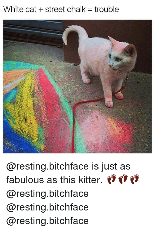 Cats, Memes, and 🤖: White cat street chalk -trouble @resting.bitchface is just as fabulous as this kitter. 👣👣👣@resting.bitchface @resting.bitchface @resting.bitchface