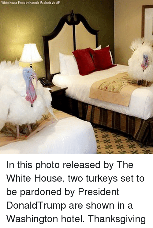 Memes, Thanksgiving, and White House: White House Photo by Harnah Macinnis via AP In this photo released by The White House, two turkeys set to be pardoned by President DonaldTrump are shown in a Washington hotel. Thanksgiving