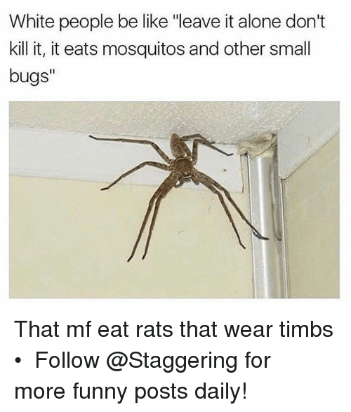 "Being Alone, Be Like, and Funny: White people be like ""leave it alone don't  kill it, it eats mosquitos and other small  bugs"" That mf eat rats that wear timbs • ➫➫➫ Follow @Staggering for more funny posts daily!"