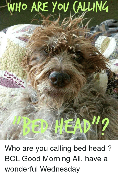 """Have A Wonderful Wednesday: WHO ARE YoU (ALLUING  BED HEAD"""" Who are you calling bed head ?   BOL   Good Morning All, have a wonderful Wednesday"""