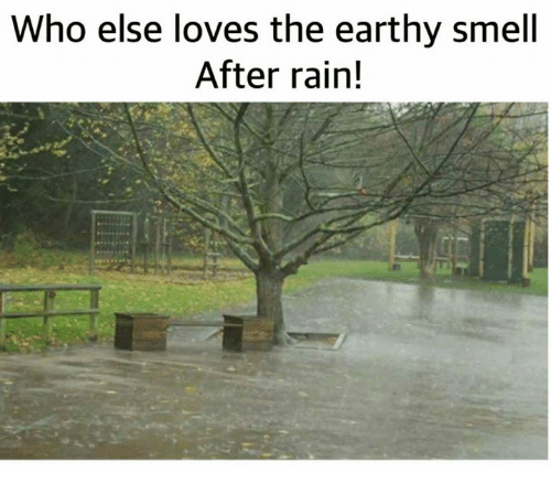 Memes, Smell, and Rain: Who else loves the earthy smell  After rain!
