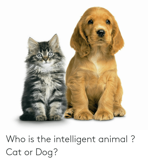 cat-or-dog: Who is the intelligent animal ? Cat or Dog?