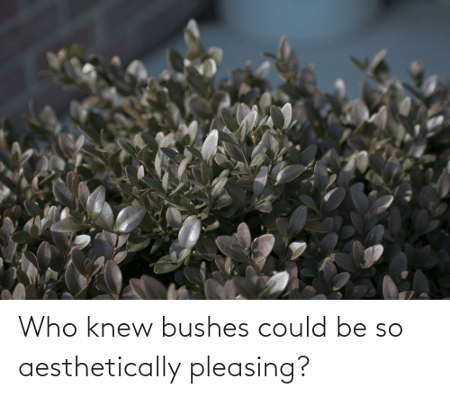 bushes: Who knew bushes could be so aesthetically pleasing?