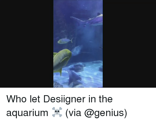 Memes, Desiigner, and Aquarium: Who let Desiigner in the aquarium ☠️ (via @genius)