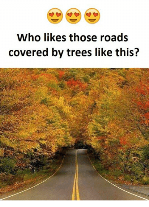 SIZZLE: Who likes those roads  covered by trees like this?