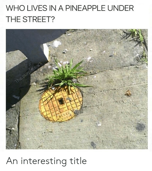 Pineapple, Purple, and Who: WHO LIVES INA PINEAPPLE UNDER  THE STREET?  The.purple.sock An interesting title