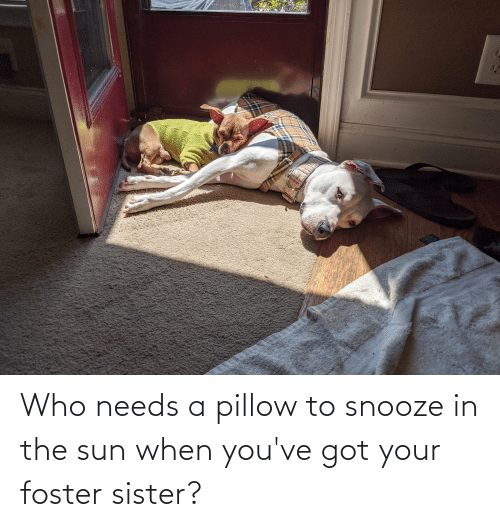 Youve Got: Who needs a pillow to snooze in the sun when you've got your foster sister?
