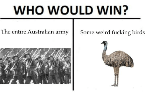 Dank Memes: WHO WOULD WIN?  The entire Australian army  Some weird fucking birds