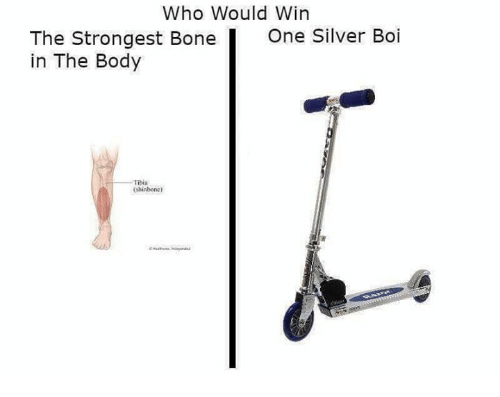 Silver, Dank Memes, and Tibia: Who Would Win  The Strongest Bone One Silver Boi  in The Body  Tibia  shinbone)