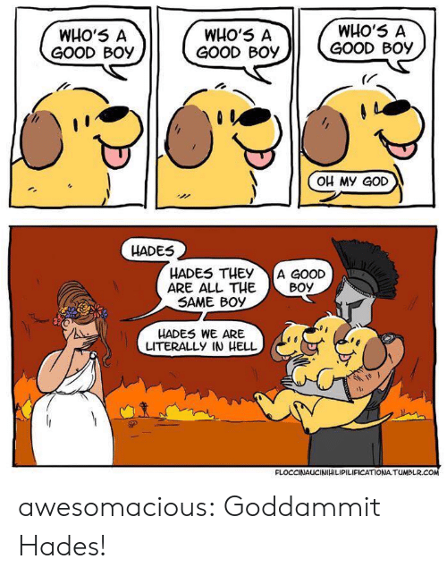 hades: WHO'5 A  GOOD Boy  WHO'5 A  GOOD Boy  WHO'5 A  GOOD BOy  (r  OH My GoD  HADES  HADES THEY A GOOD  ARE ALL THEBoy  SAME BOy  HADES WE ARE  LITERALLY IN HELL  FLOCCINAUCINIHILIPILIFICATIONA TUMBLR awesomacious:  Goddammit Hades!