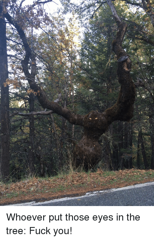 Fuck You, Funny, and Fuck: Whoever put those eyes in the tree: Fuck you!