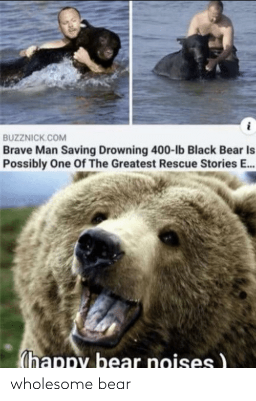 Wholesome: wholesome bear