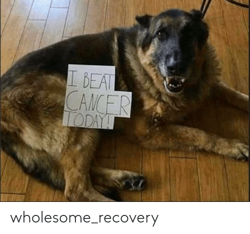 recovery: wholesome_recovery