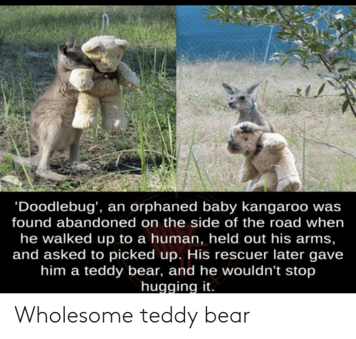 Bear, Wholesome, and Teddy Bear: Wholesome teddy bear