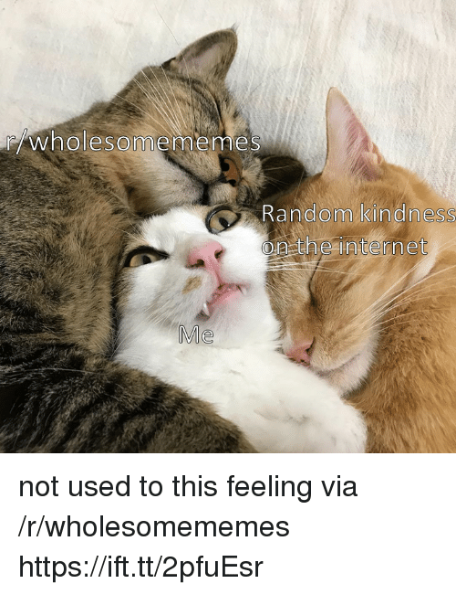 Internet, Kindness, and Random: wholesomememeS  Random kindness  on the internet  Me not used to this feeling via /r/wholesomememes https://ift.tt/2pfuEsr