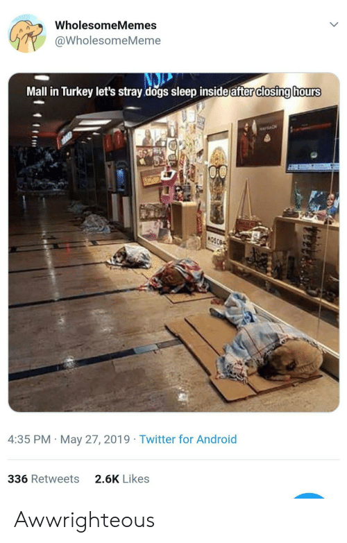 stray dogs: WholesomeMemes  @WholesomeMeme  Mall in Turkey let's stray dogs sleep inside after closing hours  4:35 PM May 27, 2019 Twitter for Android  2.6K Likes  336 Retweets Awwrighteous