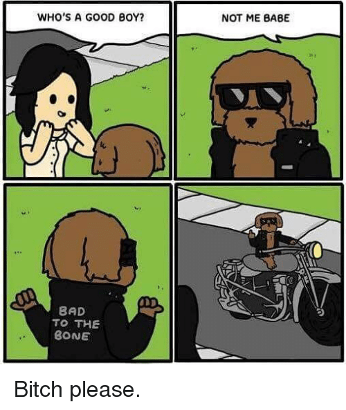 Bad To The Bone: WHO'S A GOOD BOY?  BAD  TO THE  BONE  NOT ME BABE Bitch please.