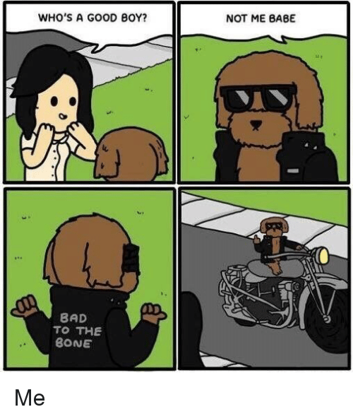 Bad To The Bone: WHO'S A GOOD BOY?  NOT ME BABE  BAD  TO THE  BONE <p>Me</p>