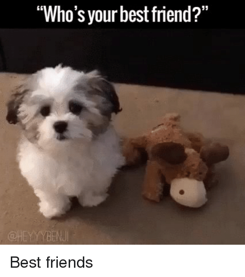 """Best Friend, Friends, and Funny: """"Who's your best friend?"""" Best friends"""