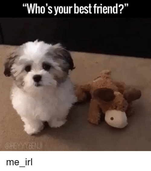 """Best Friend, Friends, and Best: """"Who's your best friend?"""" me_irl"""