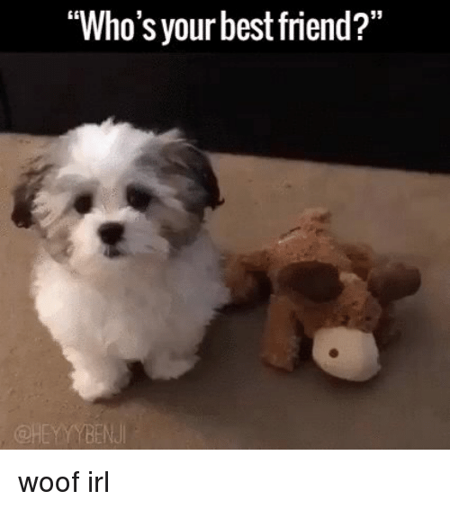 "Best Friend, Friends, and Best: ""Who's your best friend?"" woof irl"