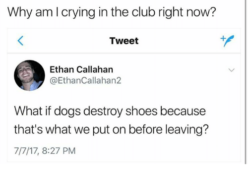 Club, Crying, and Dogs: Why am I crying in the club right now?  Tweet  Ethan Callahan  @EthanCallahan2  What if dogs destroy shoes because  that's what we put on before leaving?  7/7/17, 8:27 PM