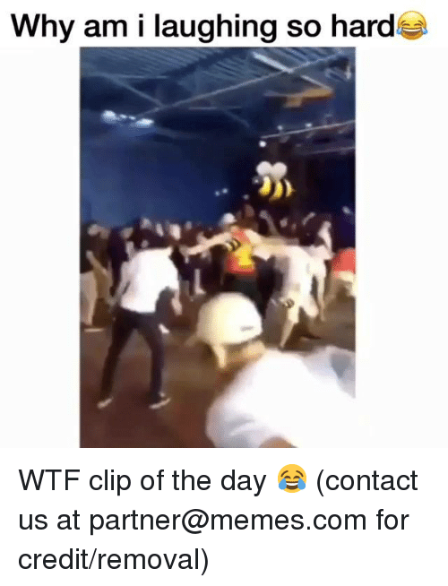 Dank, Memes, and Wtf: Why am i laughing so hard WTF clip of the day 😂  (contact us at partner@memes.com for credit/removal)