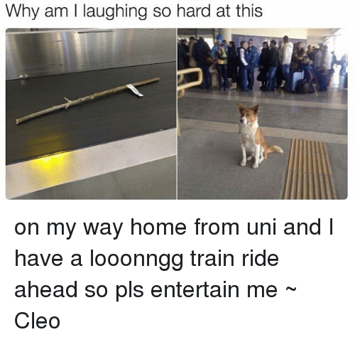 train ride: Why am l laughing so hard at this on my way home from uni and I have a looonngg train ride ahead so pls entertain me ~ Cleo