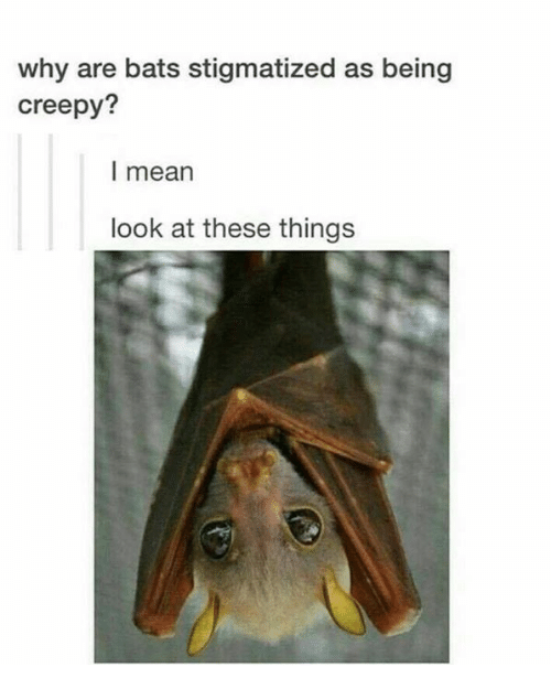 Creepy, Mean, and Humans of Tumblr: why are bats stigmatized as being  creepy?  l mean  look at these things