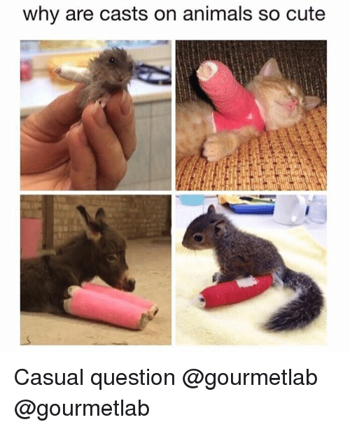 Girl Memes: why are casts on animals so cute Casual question @gourmetlab @gourmetlab