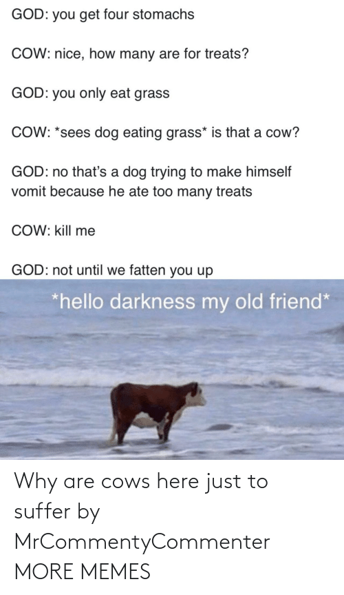 cows: Why are cows here just to suffer by MrCommentyCommenter MORE MEMES