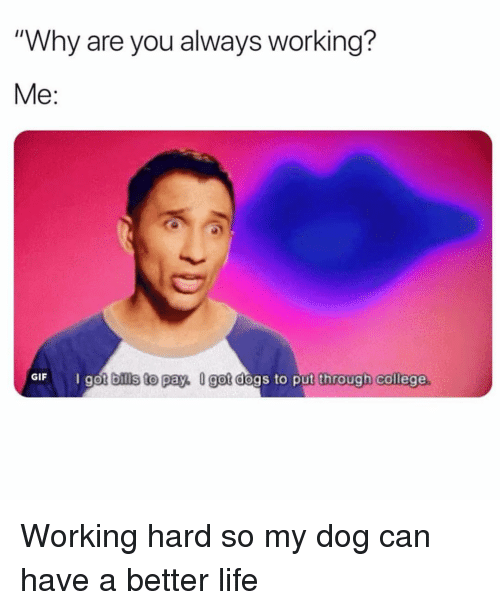"""better life: """"Why are you always working?  Me:  GIF  got bills to pay, U got dogs to put through college Working hard so my dog can have a better life"""