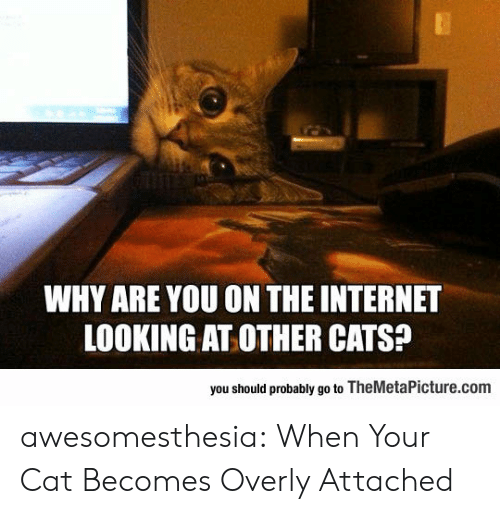 overly: WHY ARE YOU ON THE INTERNET  LOOKING AT OTHER CATS?  you should probably go to TheMetaPicture.com awesomesthesia:  When Your Cat Becomes Overly Attached