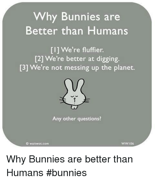 Bunnies, Memes, and 🤖: Why Bunnies are  Better than Humans  [I] We're fluffier.  [2] We're better at digging.  [3] We're not messing up the planet.  Any other questions?  囵waitwot.com  ww106 Why Bunnies are better than Humans     #bunnies