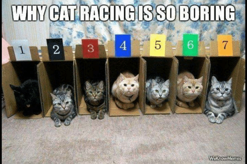 So Boring: WHY CAT RACING IS SO BORING  5  4  7  WeknowMemes