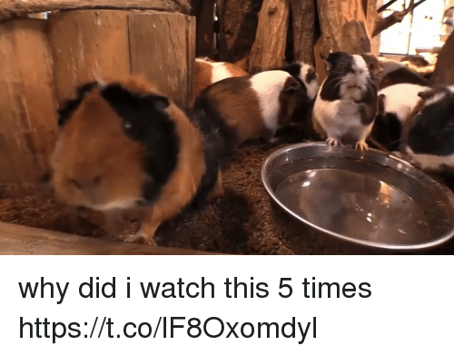 Watch, Girl Memes, and Why: why did i watch this 5 times https://t.co/lF8Oxomdyl