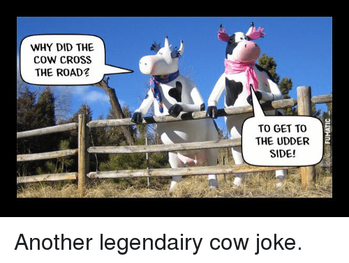 Cow Joke: WHY DID THE  cow CROSS  THE ROAD  2  TO GET TO  THE UDDER  SIDE! Another legendairy cow joke.