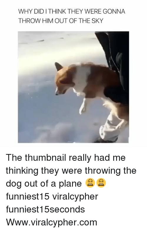 Thumbnail: WHY DIDITHINK THEY WERE GONNA  THROW HIM OUT OF THE SKY The thumbnail really had me thinking they were throwing the dog out of a plane 😩😩 funniest15 viralcypher funniest15seconds Www.viralcypher.com