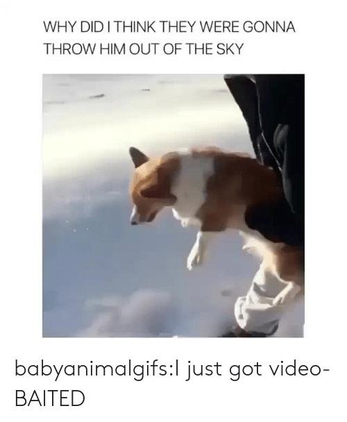 Baited: WHY DIDITHINK THEY WERE GONNA  THROW HIM OUT OF THE SKY babyanimalgifs:I just got video-BAITED