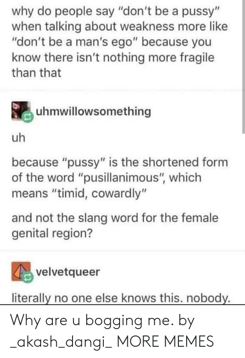 """ego: why do people say """"don't be a pussy""""  when talking about weakness more like  """"don't be a man's ego"""" because you  know there isn't nothing more fragile  than that  uhmwillowsomething  uh  because """"pussy"""" is the shortened form  the word """"pusillanimous"""", which  means """"timid, cowardly""""  and not the slang word for the female  genital region?  velvetqueer  literally no one else knows this. nobody. Why are u bogging me. by _akash_dangi_ MORE MEMES"""