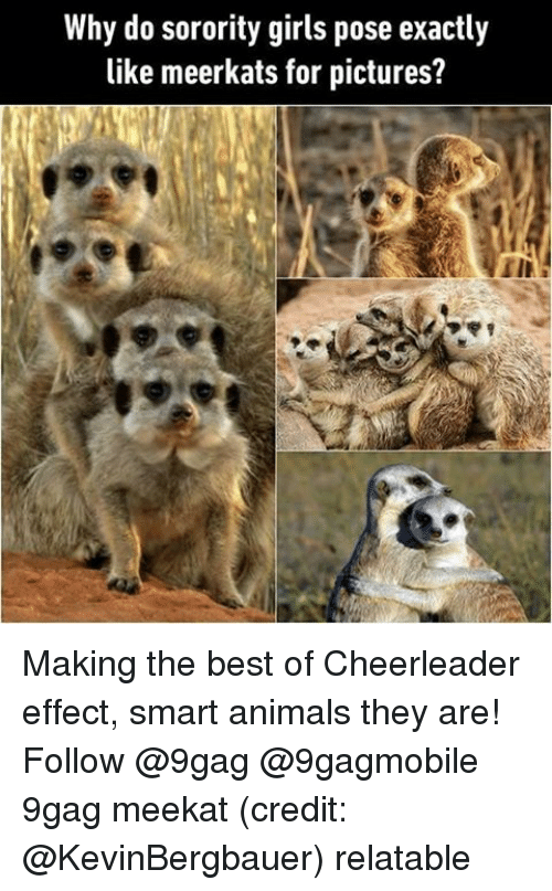 Relatables: Why do sorority girls pose exactly  like meerkats for pictures? Making the best of Cheerleader effect, smart animals they are! Follow @9gag @9gagmobile 9gag meekat (credit: @KevinBergbauer) relatable