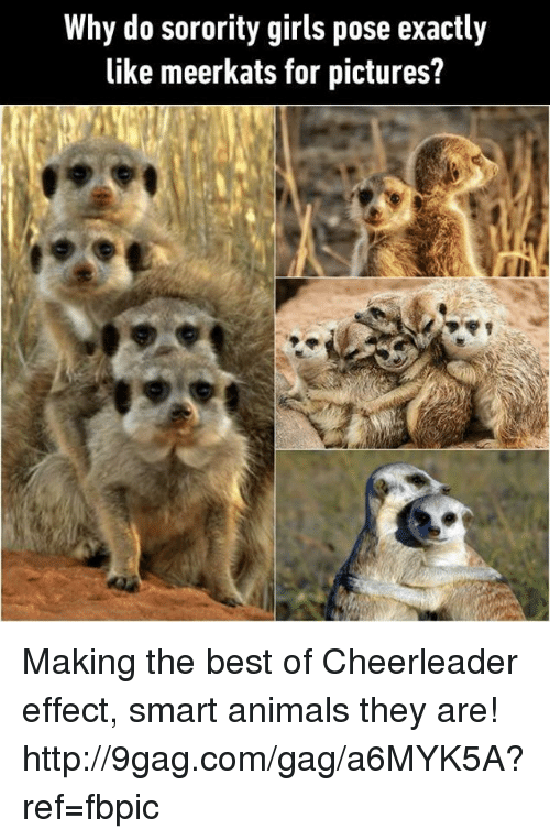 Girl Posing: Why do sorority girls pose exactly  like meerkats for pictures? Making the best of Cheerleader effect, smart animals they are!  http://9gag.com/gag/a6MYK5A?ref=fbpic