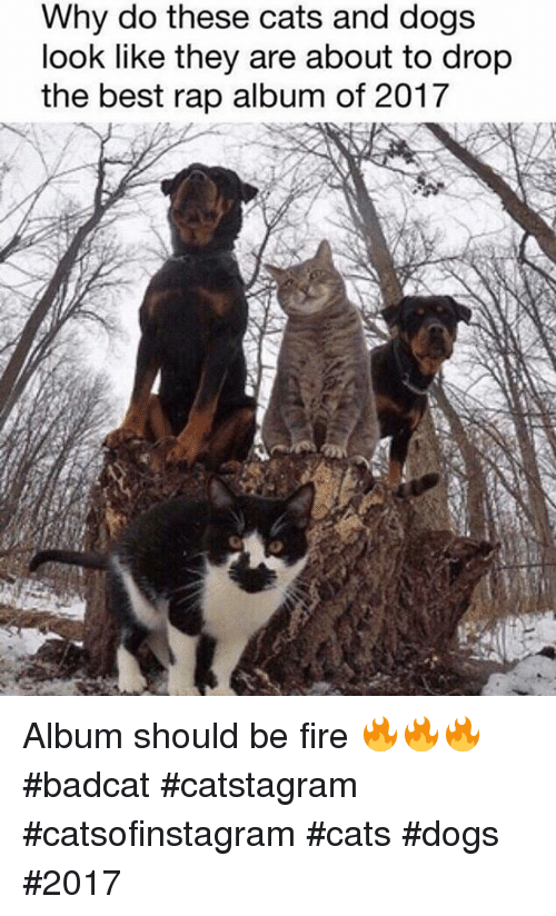 cat dog: Why do these cats and dogs  look like they are about to drop  the best rap album of 2017 Album should be fire 🔥🔥🔥 #badcat #catstagram #catsofinstagram #cats #dogs #2017