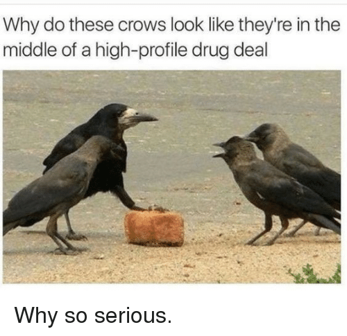So Serious: Why do these crows look like they're in the  middle of a high-profile drug deal Why so serious.
